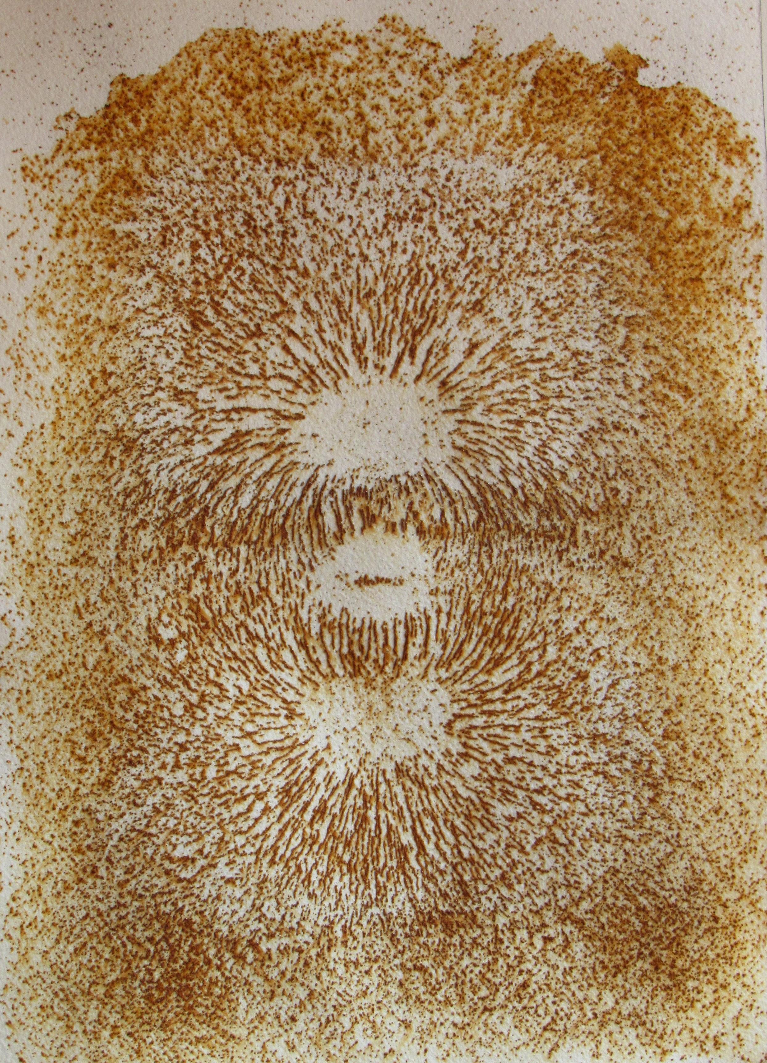 Metallic Print by Ted Sheridan